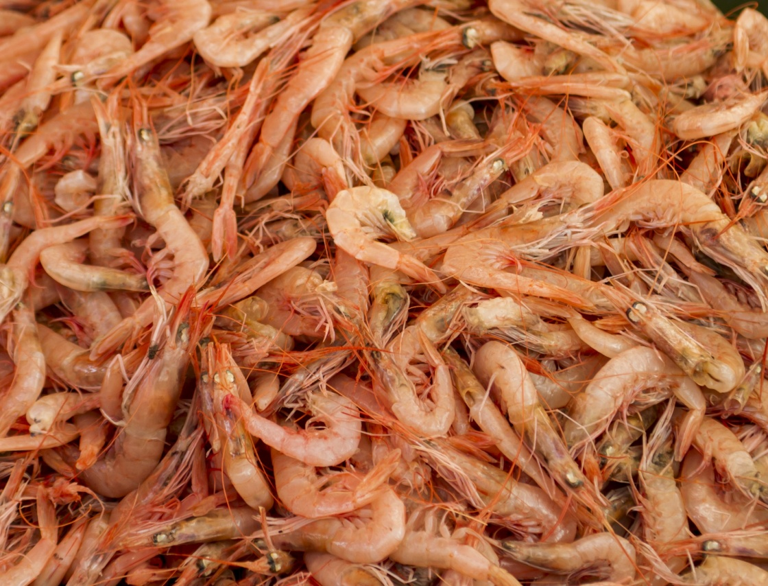 'Fresh shrimps in the fish market' - Spalato